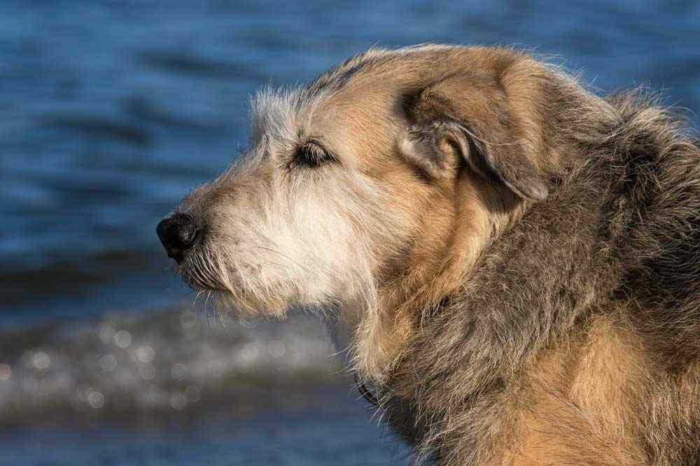 Mit dem Hund auf der Insel Rügen