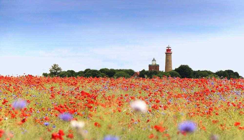 Insel Rügen - eine malerische artenreiche Landschaft