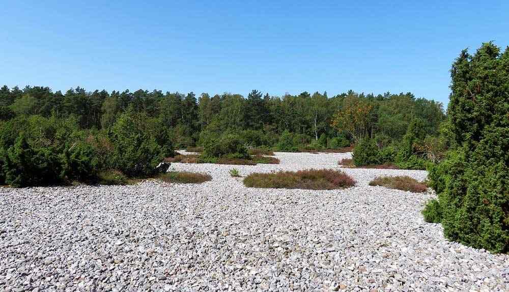 Die Feuersteinfelder Rügen - das deutsche Stonehenge - in der Nähe von Mukran und Prora